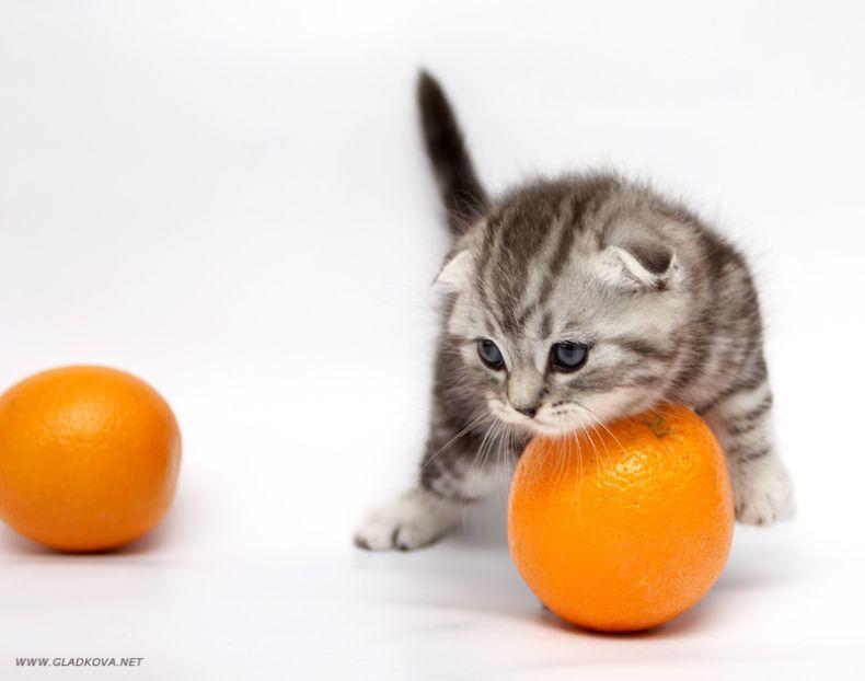 cute kitties017_16
