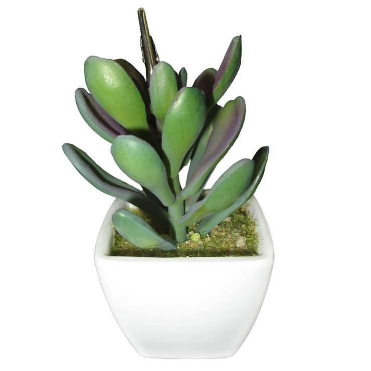 Succulent Pot with Holder- 4.5 in.