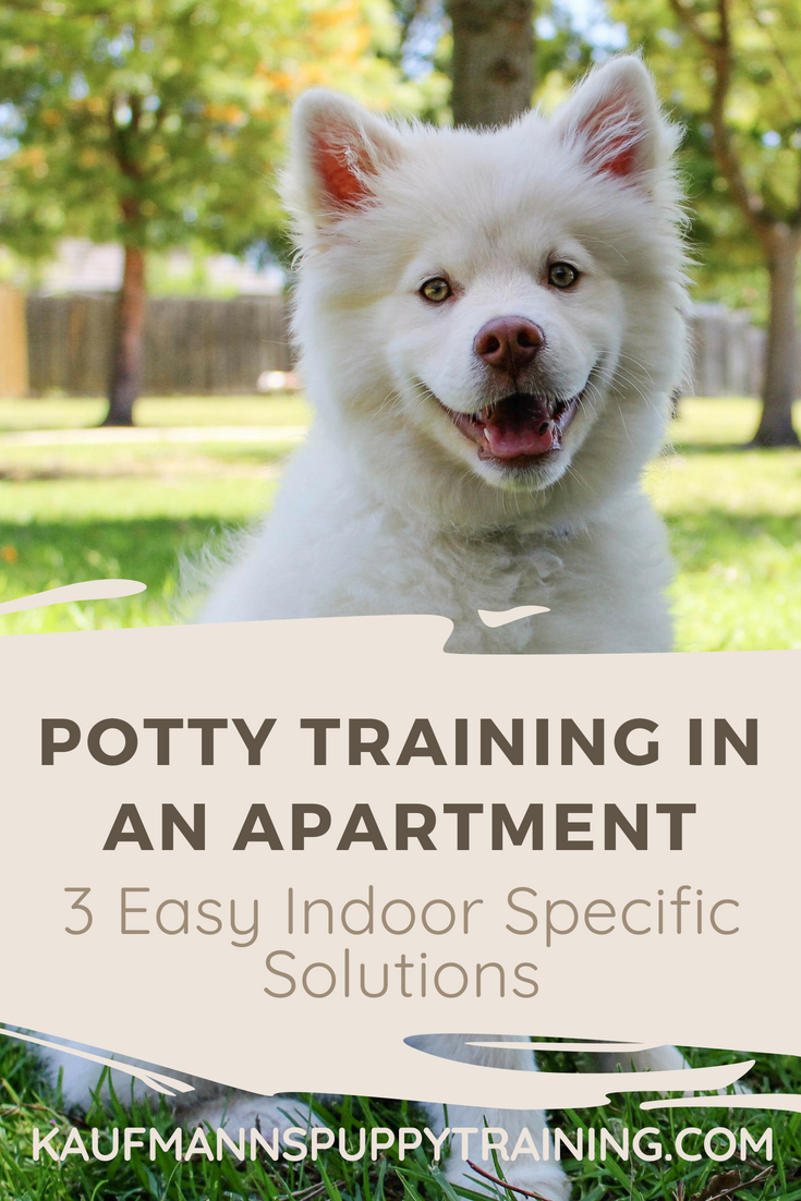 Learning How To Potty Train A Puppy Can Be Challenge And Living On The Fourth Floor In City Doesn T Make It Any Easier I Ve Written About