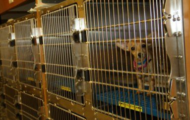 Pet Adoptions Ramona Humane Society Pet Adoption Mixed Breed Dogs Humane Society