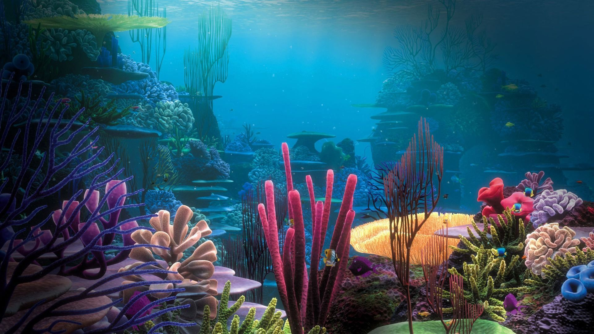 Ocean Life Backgrounds images free 1920—1080 Ocean Life