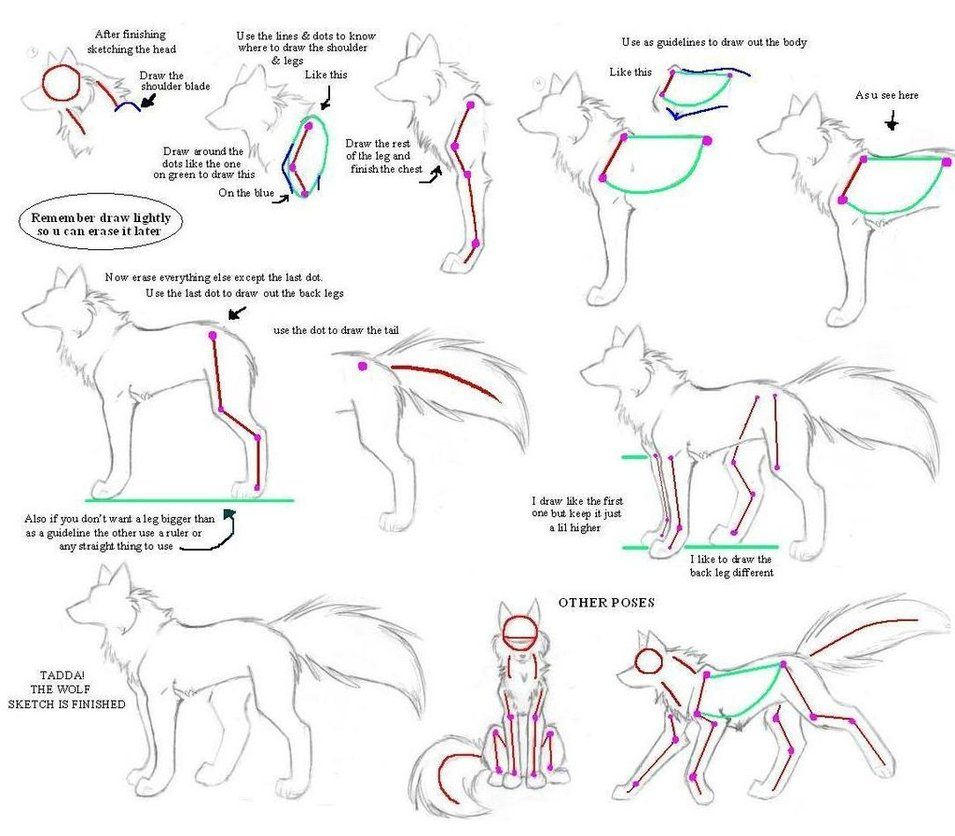 How to drw Wolves Part 3body by Kimai on deviantART