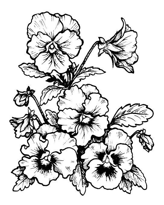 Eet53r Flower Line Drawings Flower Drawing Pansies