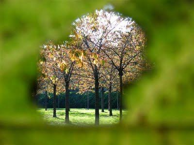 natuurrondleiding door een IVN-Natuurgids: herfst