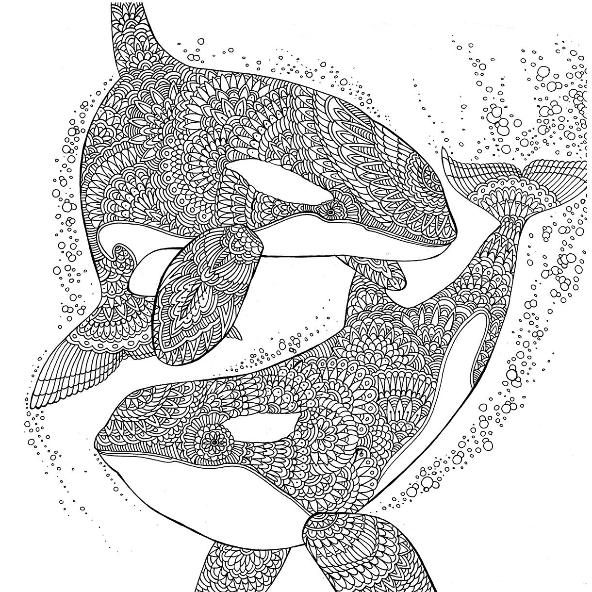 Orcas The Aquarium Colouring Book Richard Merritt Orcas Aquarium Adultcolouring Colouringbook Illustration Mandala Kleurplaten Kleurplaten Kleurboek