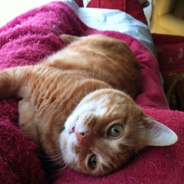 My old cat, Micifu.