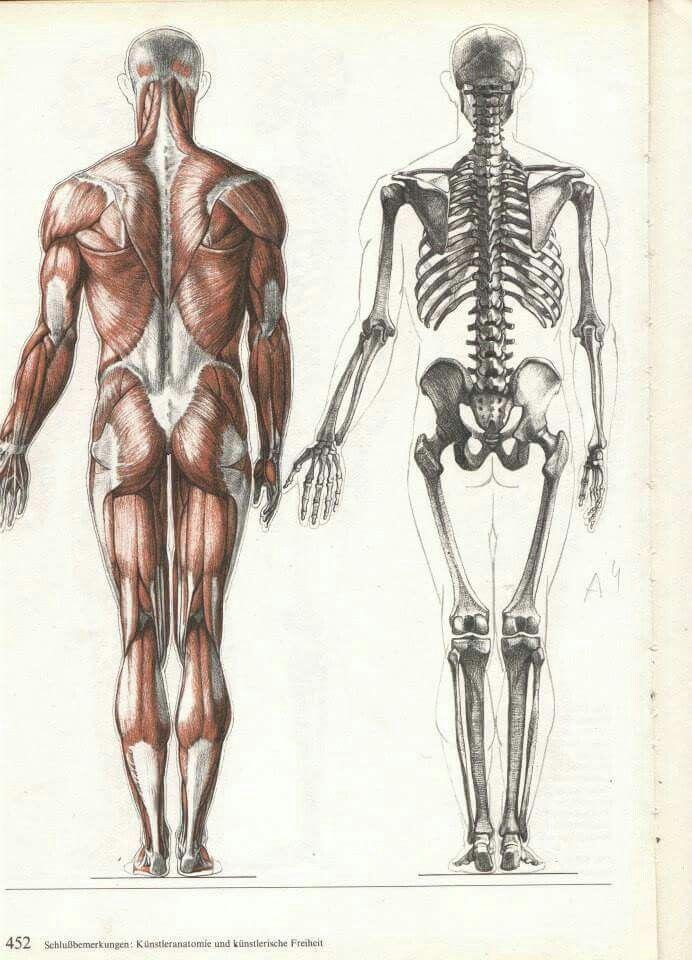 Pin de Liseth García Martínez en Dibujo 1 | Pinterest | Anatomía ...
