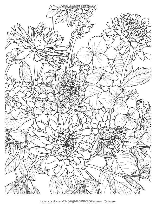 Veranda Flowers A Coloring Book Veranda 9781618372376 Amazon Com Books Printable Flower Coloring Pages Detailed Coloring Pages Flower Coloring Pages