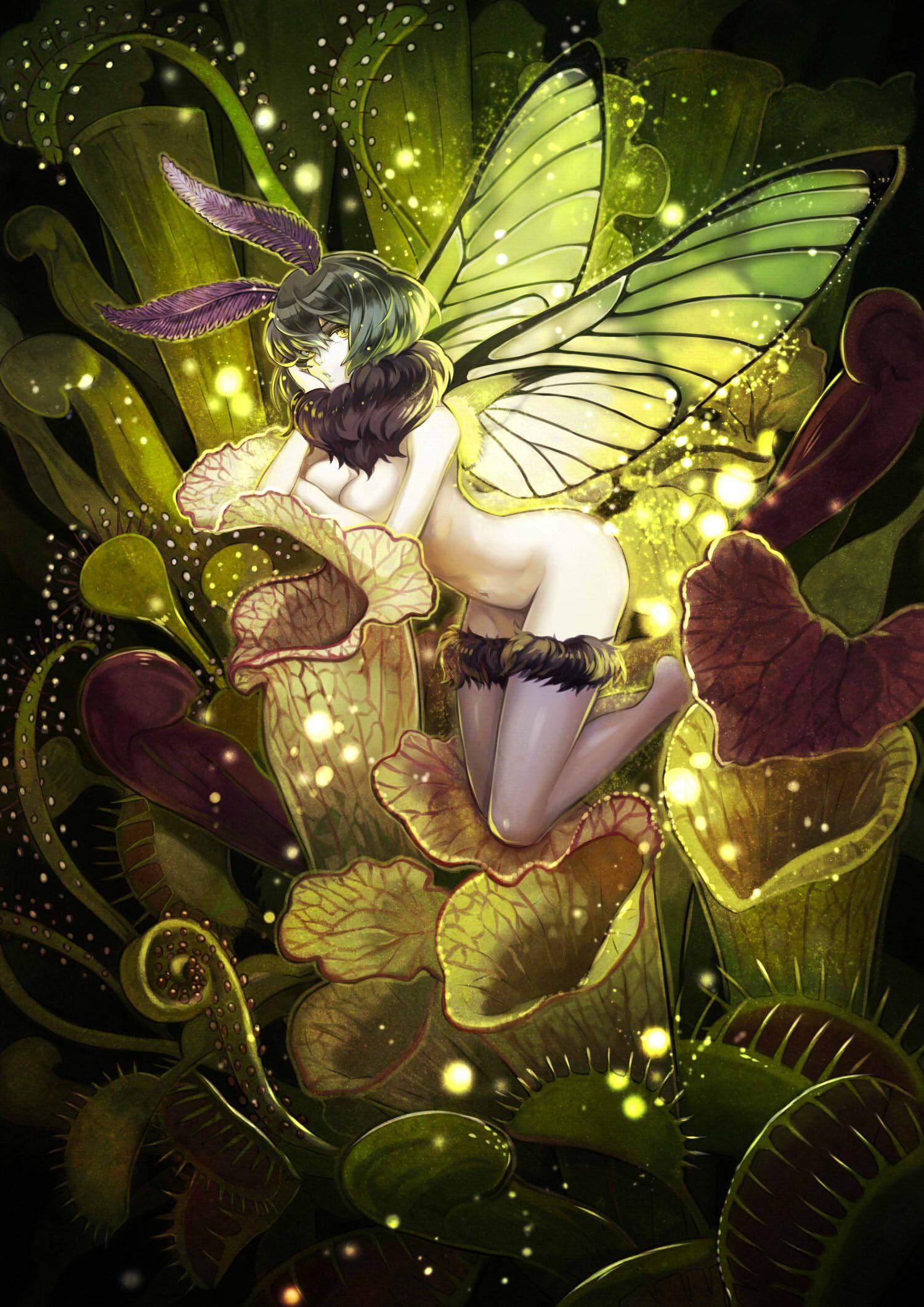 食虫植物と妖精さん