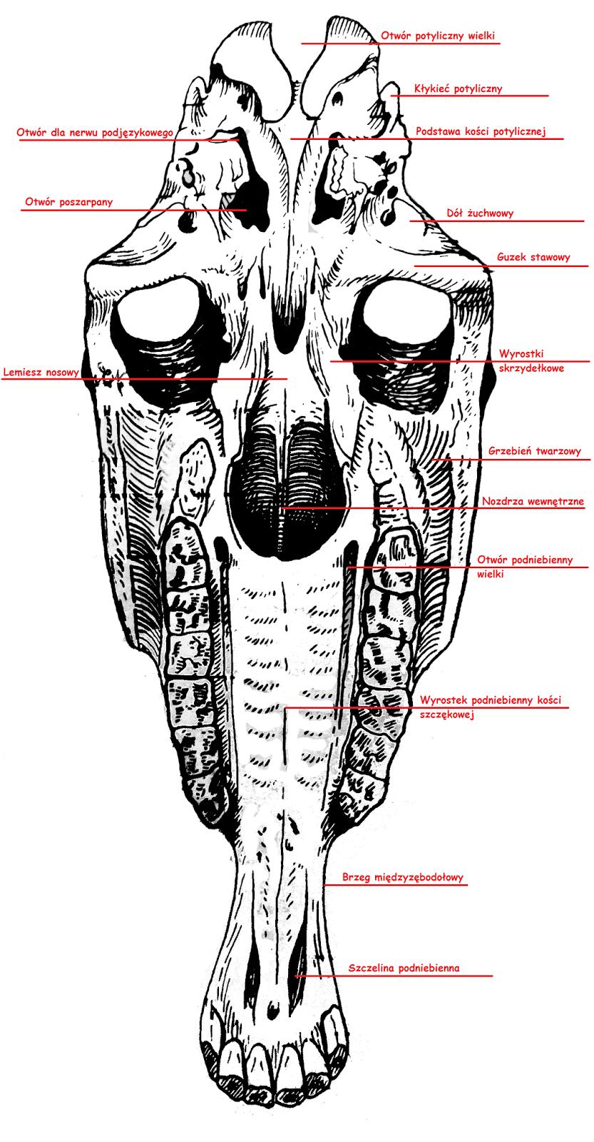 Okiem Koniary Wcielmy Sie W Archeologow Horse Anatomy Horse Barn Plans Anatomy