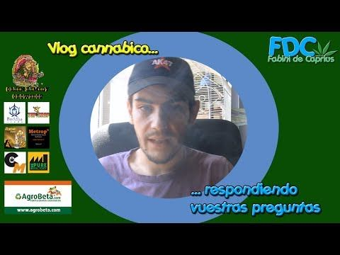 Vlog cannabico| Respondiendo vuestras preguntas y fumando