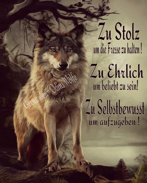 Photo of Like a wolf – wisdom, quotes & sayings – #a # sayings #tattoo dogs #We …