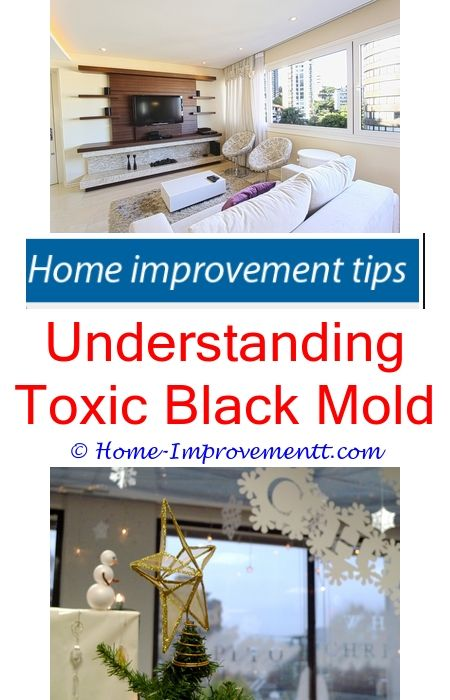Understanding toxic black mold home improvement tips 38727 understanding toxic black mold home improvement tips 38727 security systems diy ideas and diy network solutioingenieria Gallery