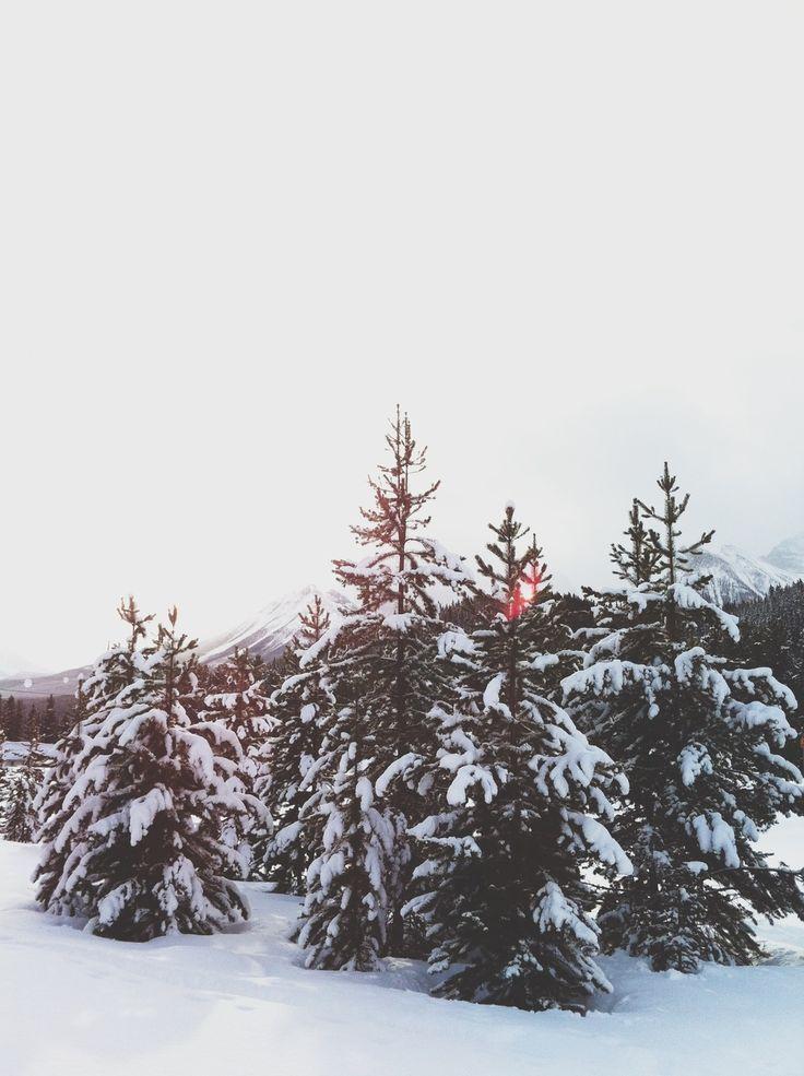 Snowy Trees Via The Violet By Carmyn Joy Winter Wonder Snowy Trees Winter Scenes