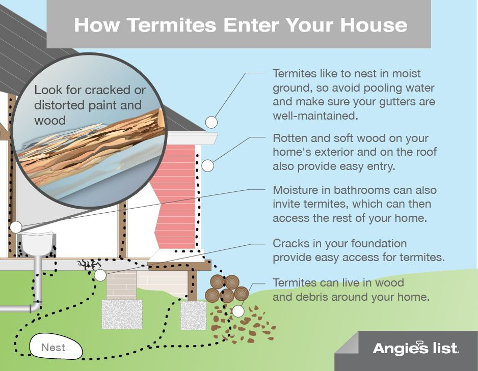 How Termites Enter Your House Work Pinterest Too