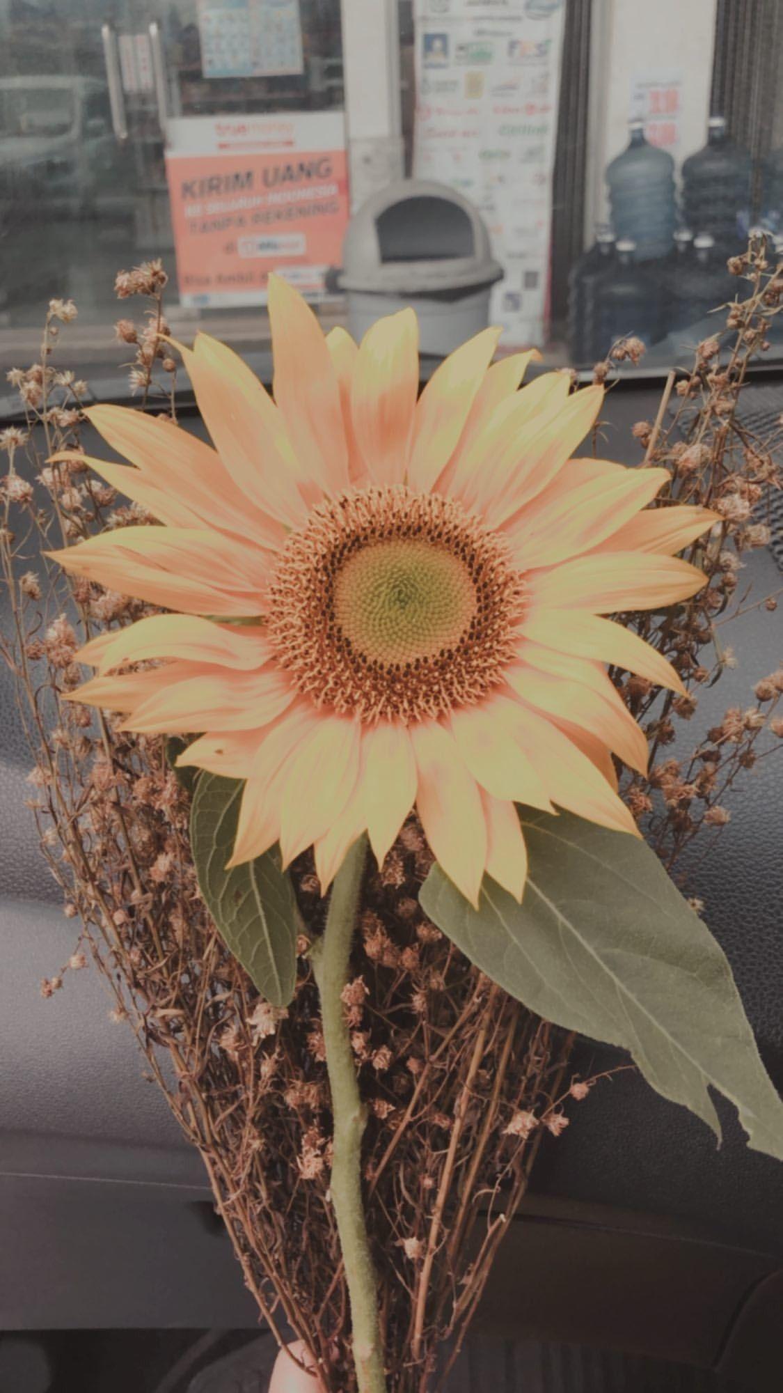 Pin Oleh Dila Diana Di Flower Poster Bunga Fotografi Bunga Lukisan Bunga Matahari