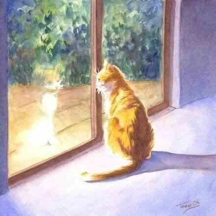 explore marmalade cat art and more