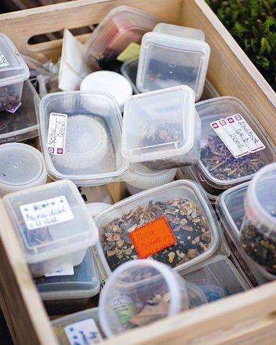 Saatgut in Kunststoffschachteln Aufheben: Weil gutes Saatgut teuer ist, sammelt Ursula Berger die Samen von ihren Pflanzen und verwahrt sie in ausrangierten Kunststoffschachteln.