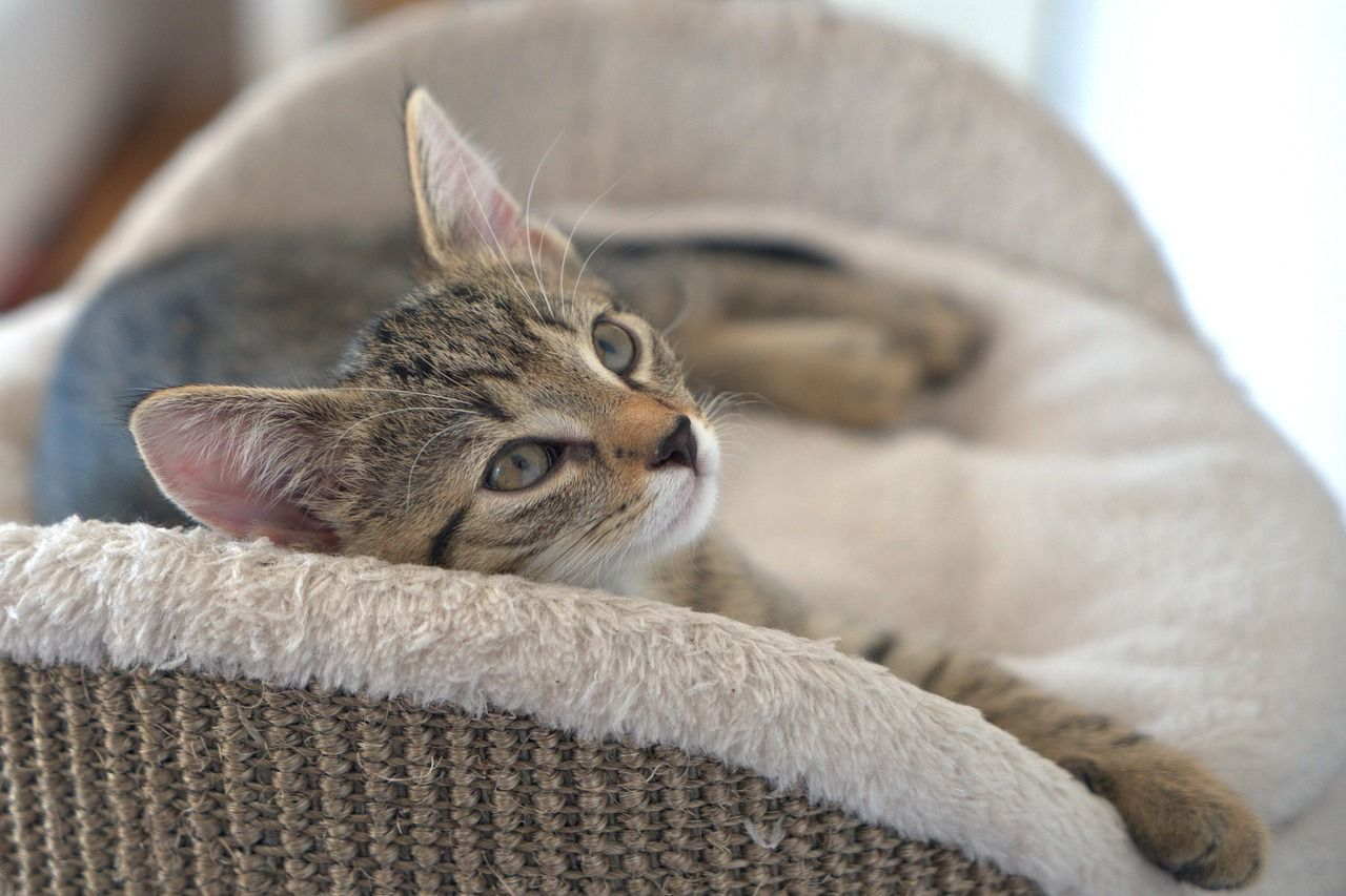 Cute Kitty Chilling In Her Bed Cute Kitty Kitten Cutie Cute Cats Cats Cat Lovers