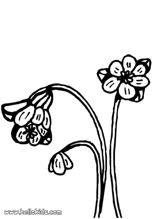 There is the Cowslip coloring page. Perfect coloring sheet for kids ...
