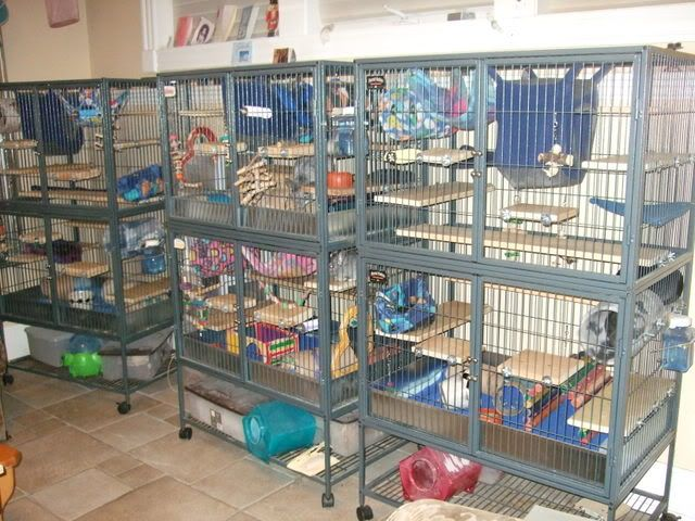 The Ferret Nation Cage...just Bought This $200 Cage For