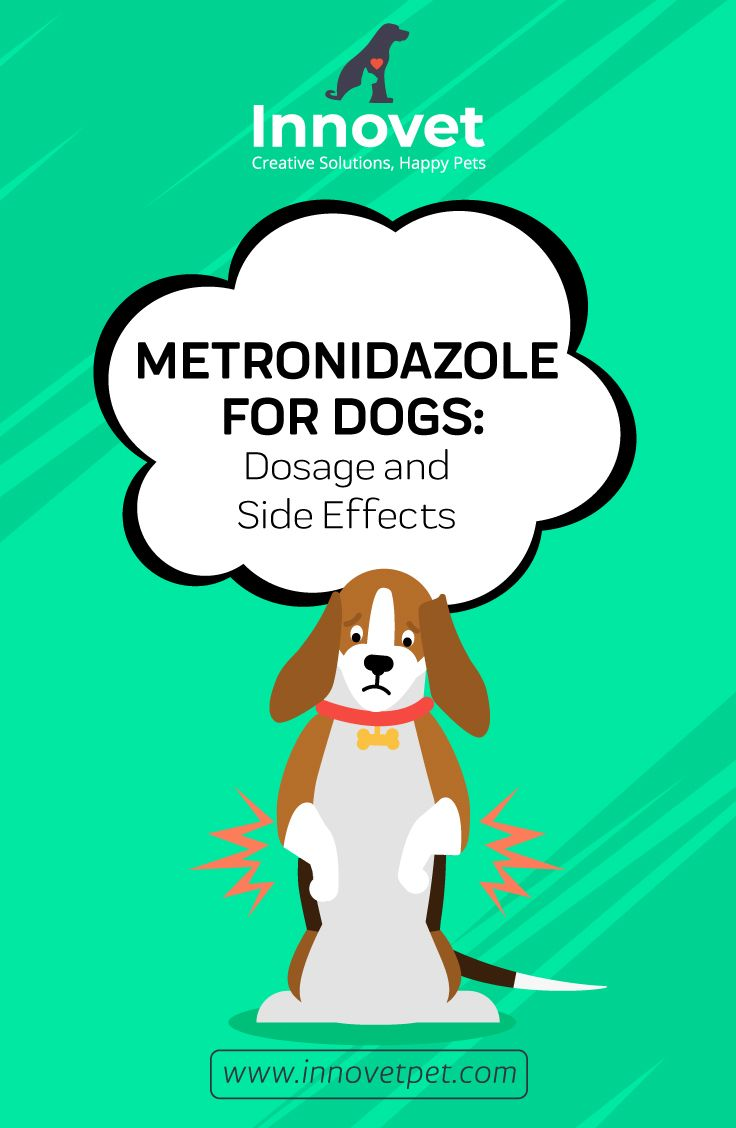 Metronidazole for dogs all you need to know dogs happy