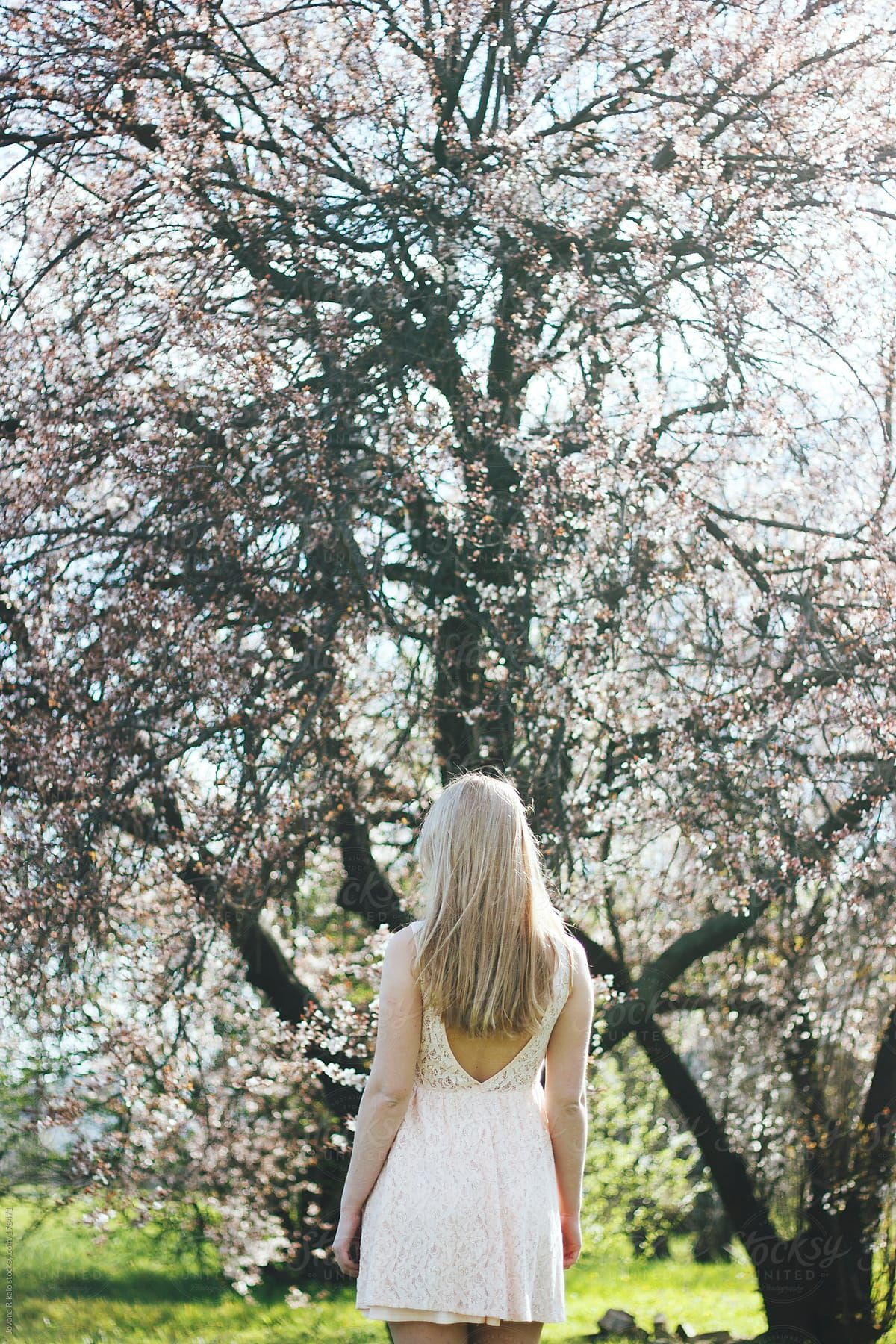 Young Woman Standing In Front Of Big Cherry Blossom Tree Portrait Girl Blossom Trees Girl Standing