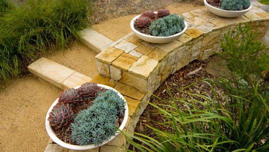 succulents - Balgowlah Heights   Gallery   Joanne Green Landscape Design