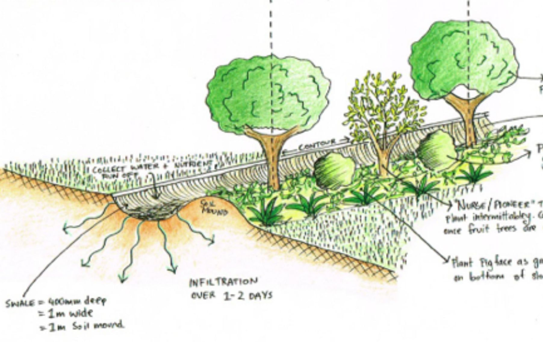Swales on contour water harvesting archives good life for Design of stabilization pond