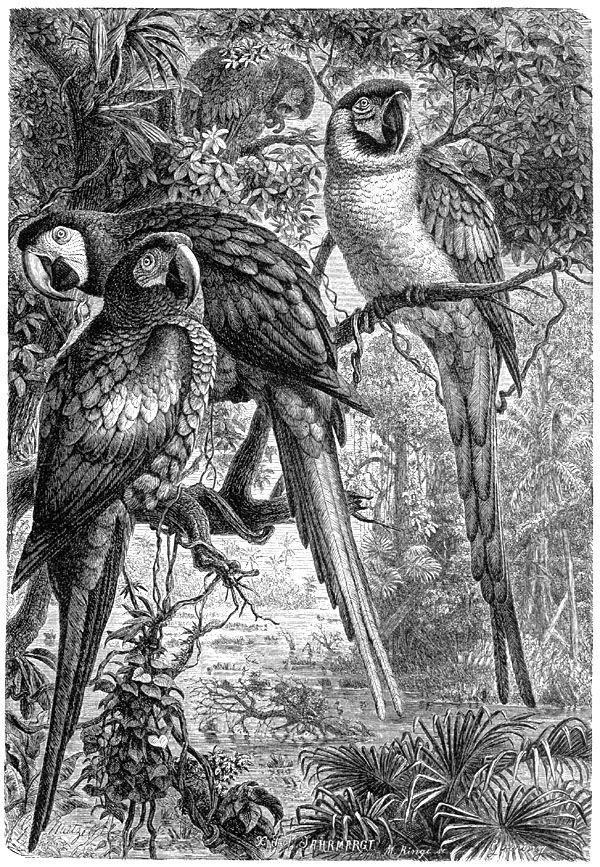 Животные в гравюре (с изображениями) | Рисунки животных ...