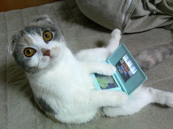 The 40 Hottest Cats In Tech Funny Cat Fails Funny Cat Compilation Cats And Kittens