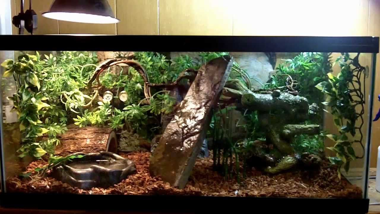 humidity guide for you 39 re ball pythons terrarium or any. Black Bedroom Furniture Sets. Home Design Ideas