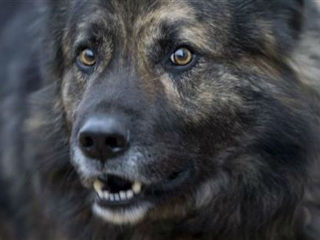 Croatian Court Bans Dog From Barking At Night Dogs Animals