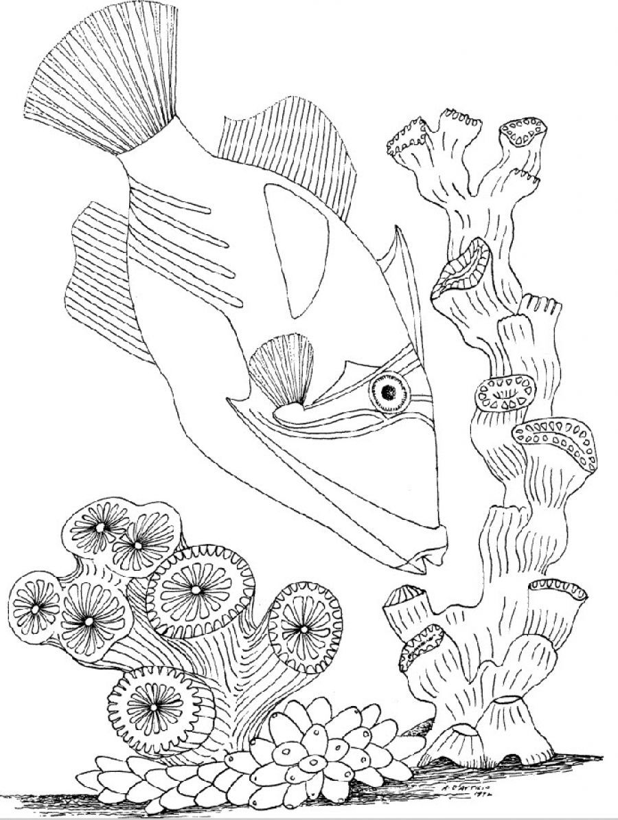 Page Not Found Coloring Page Animal Coloring Pages Coloring Pages Inspirational Fish Coloring Page