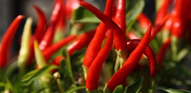 No Brasil, são cultivadas pimentas ardidas como a famosa pimenta malagueta, a cumari-do-pará e a dedo-de-moça, mas se produz também as menos picantes, a exemplo da pimenta-de-cheiro, a cambuci ou chapéu-de-frade e a b