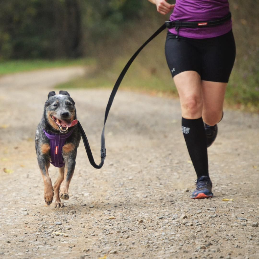 Hit The Trail With Your Favorite Running Partner And Go Hands Free