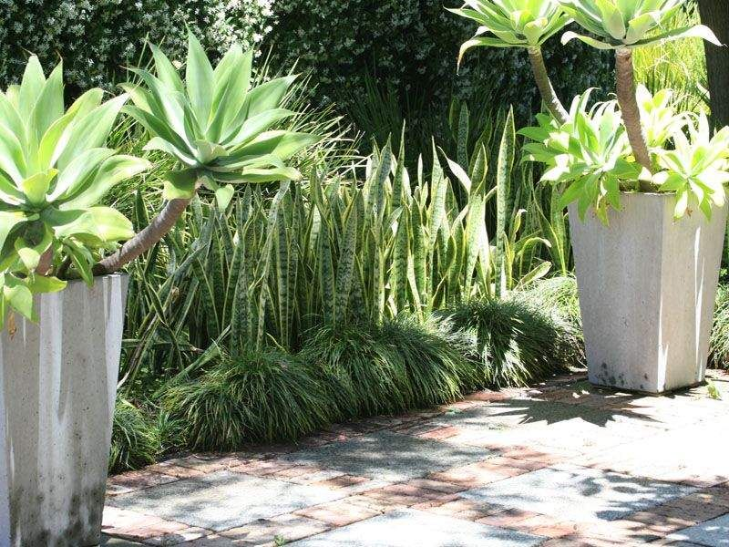 Agave and grass combo paving trim backyard gems pinterest mediterranean gardens ideas cadagu in mediterranean garden design in germany workwithnaturefo