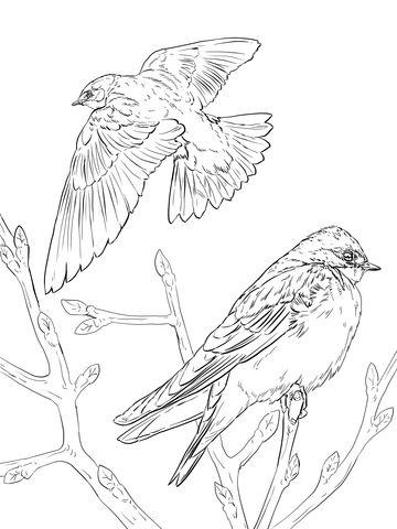 Realistic Tree Swallows Coloring Page From Swallows Category