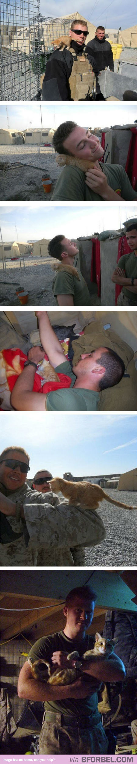 Army Guys Who Saved Kittens… Cue The Awws.