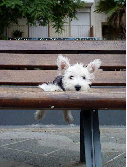 my bench!!!