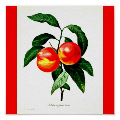 Poster-Botanicals-Pierre Joseph Redoute 27