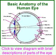 Eye anatomy | Anatomy, Eyes, Diagram of the eye