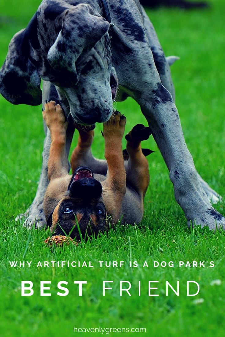Why Artificial Turf Is A Dog Park S Best Friend Dane Puppies