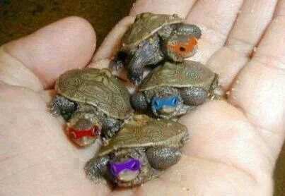 Ninja turtles!!!! Lol♡♡
