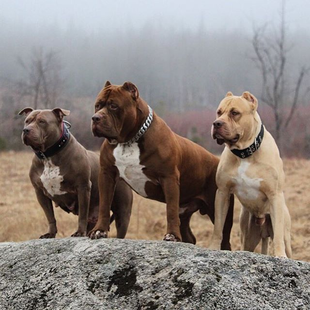 Iamthehulk The Hulk With His Parents Love This Family Photo Dogs