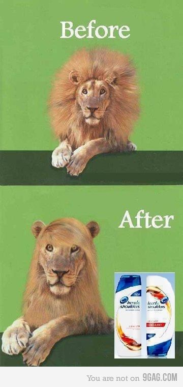 LOL, this made me laugh! oh the power of shampoo and conditioner...