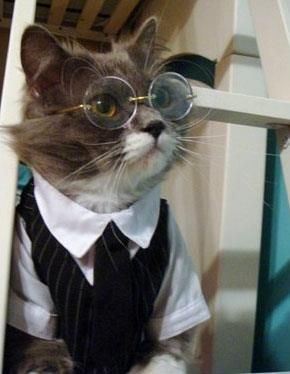 gato maestro