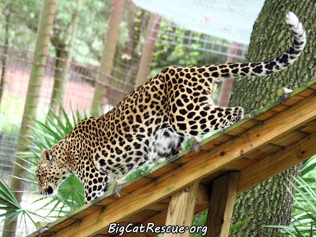 Pin on Big Cats Rescue
