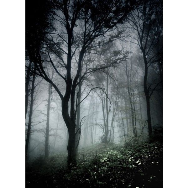 Likes | Tumblr ❤ liked on Polyvore featuring backgrounds, photos, nature, fairytale, image and scenery