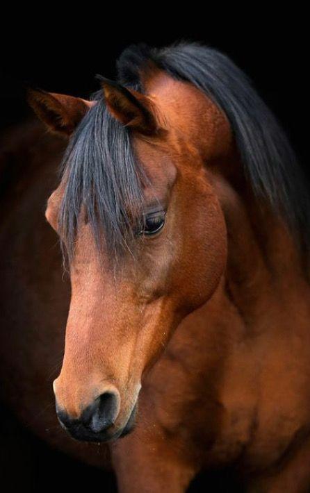 official photos 86b11 c2160 Pin af Pelre på Heste | Heste og Dyr